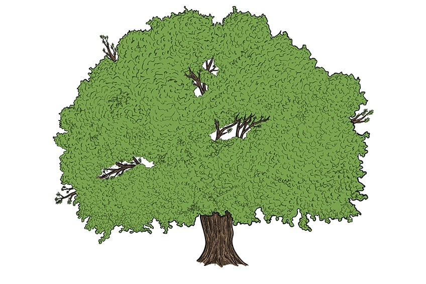 tree drawing 12