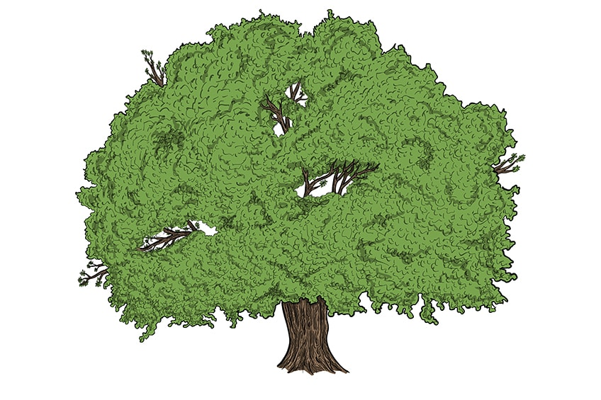 tree drawing 13