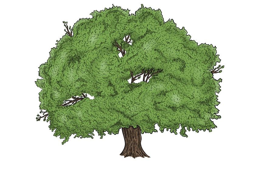 tree drawing 14