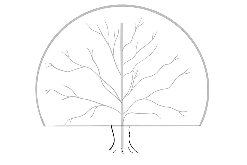 tree drawing 5
