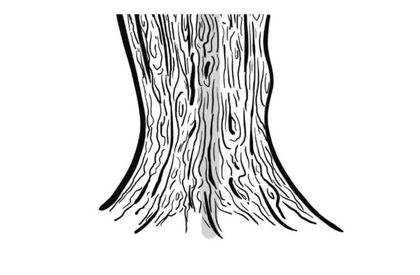 tree drawing 6b