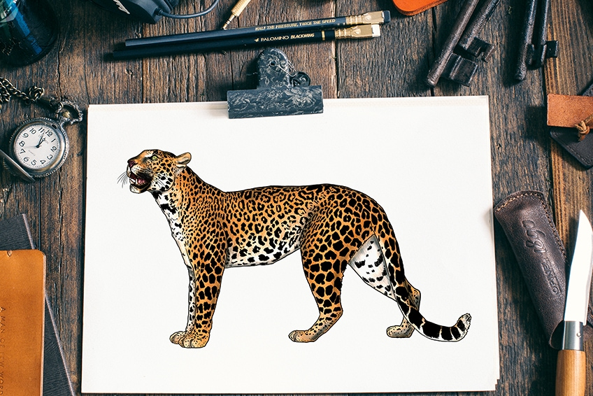 how to draw a leopard 2