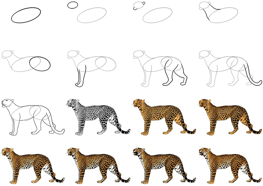 how to draw a leopard collage