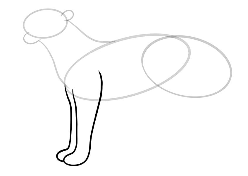 leopard drawing 6