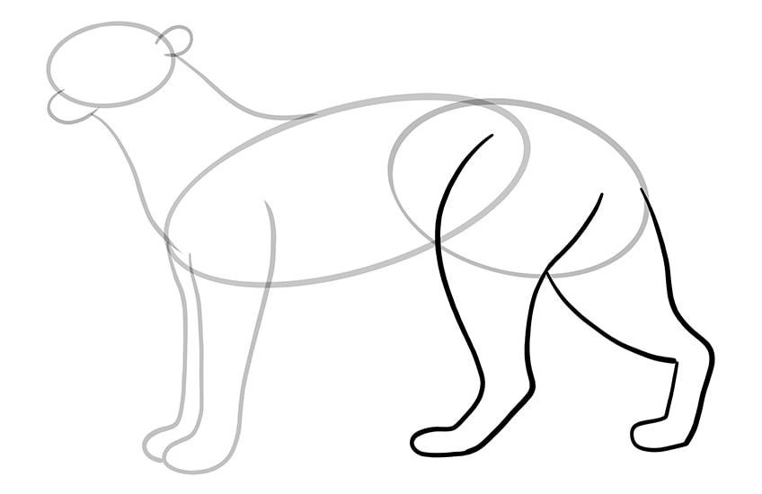leopard drawing 7
