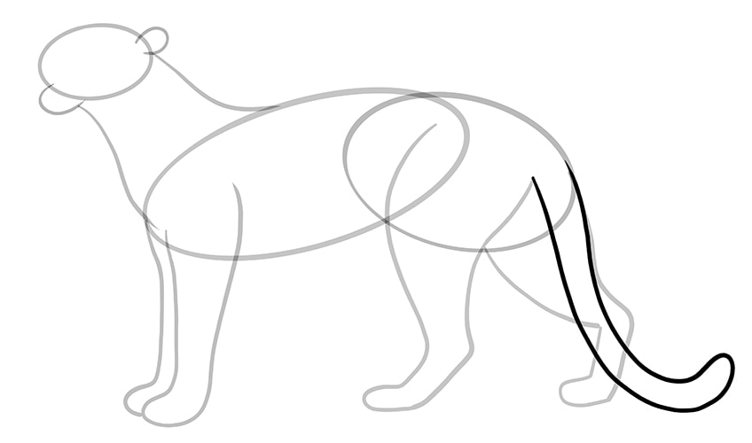 leopard drawing 8