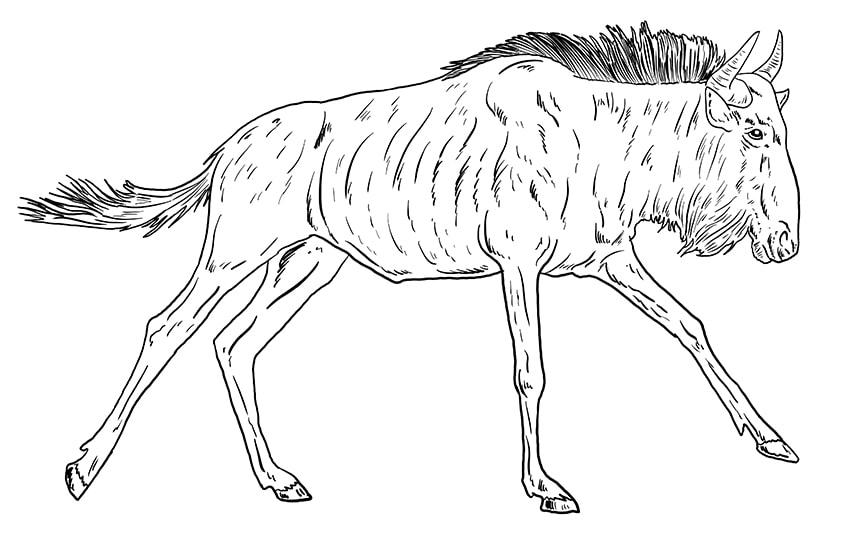 wildebeest drawing 10
