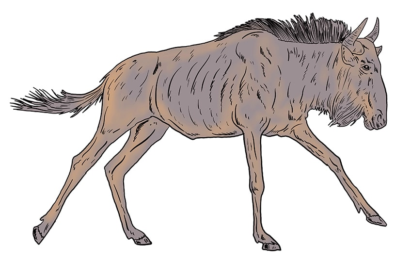 wildebeest drawing 12