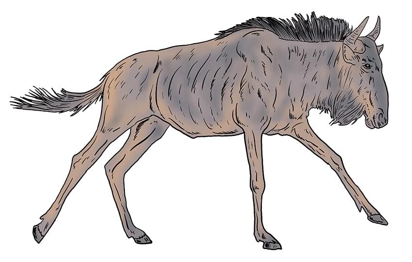 wildebeest drawing 13