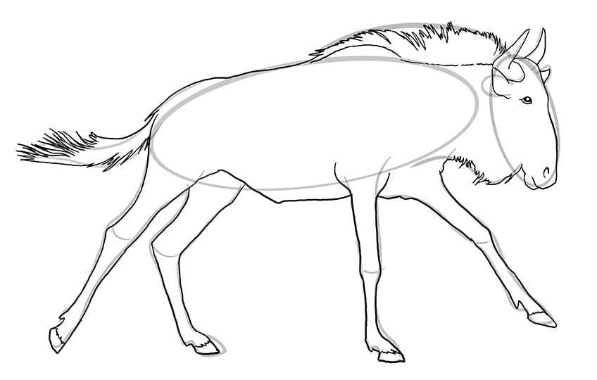 wildebeest drawing 9